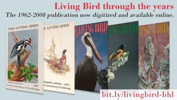 """""""Living Bird"""" Archive Now Online"""