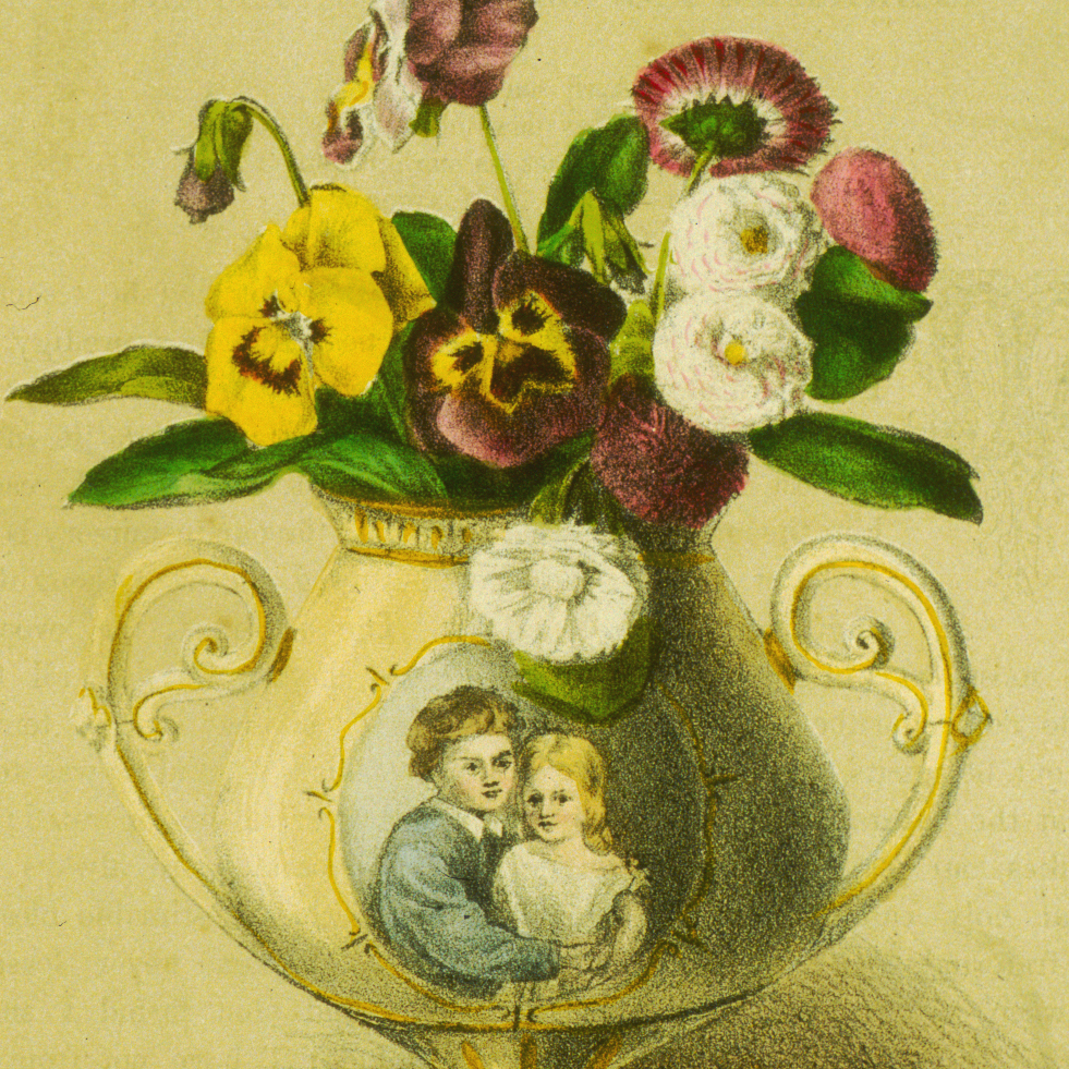 flower pansy collection language of flowers flower emblems