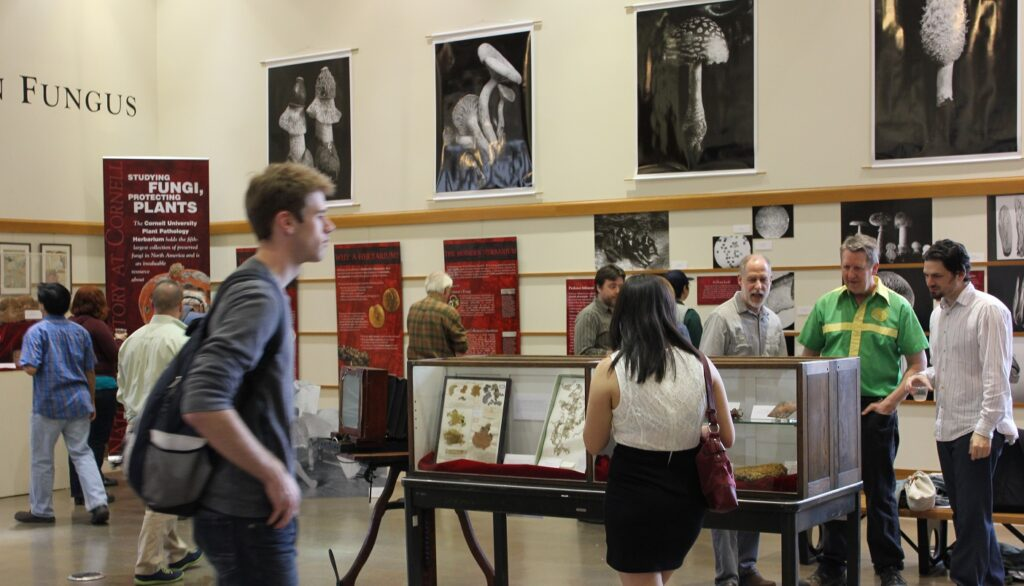 Mann Gallery exhibit Focus on Fungi