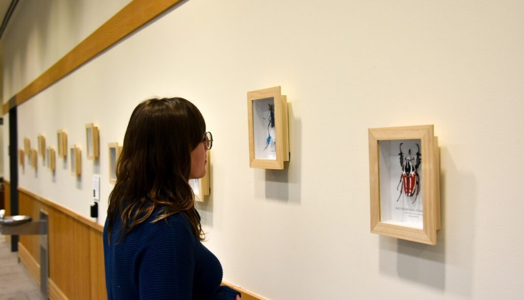 Patron looking at images in Top Shelf Gallery exhibit